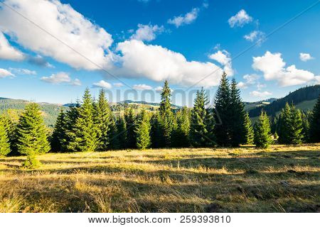 Beautiful Landscape Of Apuseni Mountains In Autumn. Spruce Forest On A Grassy Hill. Gorgeous Cloudsc