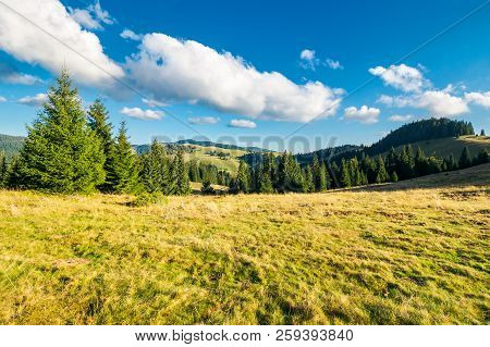 Beautiful Landscape Of Apuseni Mountains In Autumn. Spruce Forest On A Grassy Meadow. Gorgeous Cloud