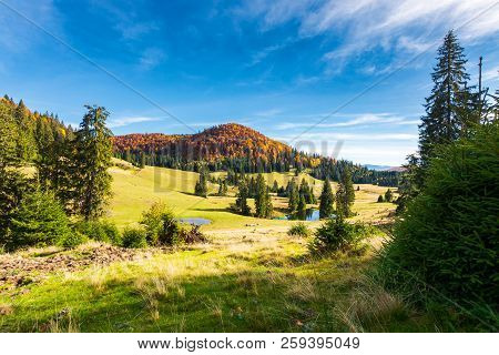 Pond Among Spruce Trees. Beautiful Autumn Landscape In Mountains. Gorgeous Light And Mood, Wonderful