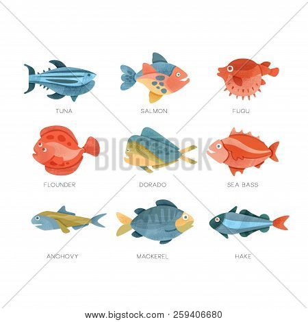 Sea Fish Set, Tuna, Salmon, Fugu, Flounder, Dorado, Sea Bass, Anchovy, Mackerel, Hake Vector Illustr