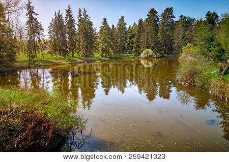 Mirroring Conifers In A River With Blue Sky