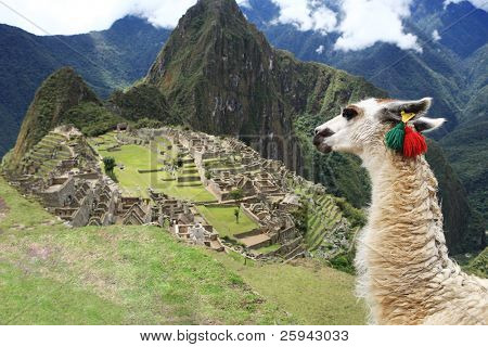 Llama at Historic Lost City of Machu Picchu - Peru poster