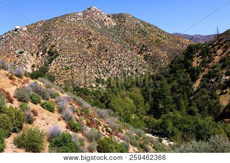 Pine forests at a mountainous terrain where this ecosystem meets an arid high desert plain taken in the rural San Bernardino Mountains, CA poster