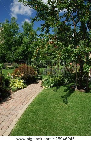 Beautiful garden with apricot and bench