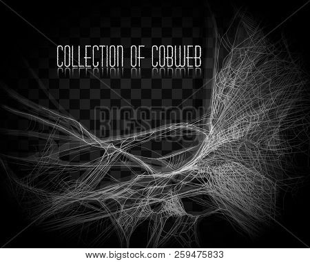 Collection Of Cobweb, Isolated On Black, Transparent Background. Spiderweb For Halloween Design. Spi