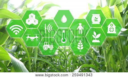 Iot, Internet Of Things, Agriculture Concept, Smart Robotic (artificial Intelligence/ Ai) Use For Ma
