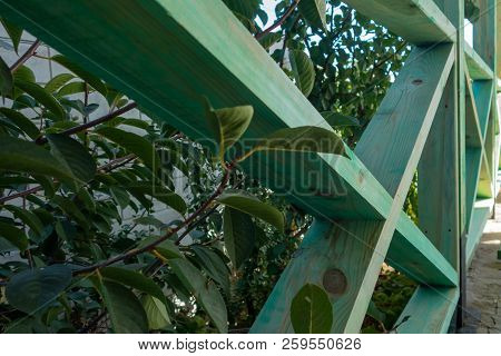 Stock Photo - Wooden Fence In The Grass. Wooden Fence Of Green Boards.