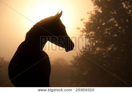 Silhouette of a beautiful Arabian horse against sun shining through heavy fog, in sepia tone