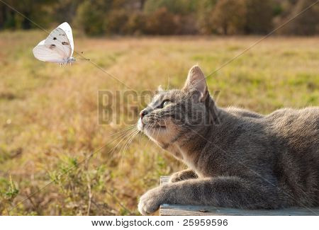 Blue tabby kitty cat watching a white butterfly poster