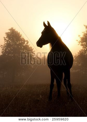 Refined Arabian horse in heavy fog against rising sun, in rich sepia tone poster
