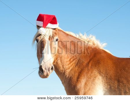 Funny image of a Belgian Draft horse wearing a santa hat
