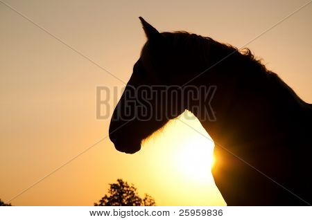 Magnificent profile of a powerful Belgian Draft horse silhouetted against rising sun in rich sepia tone