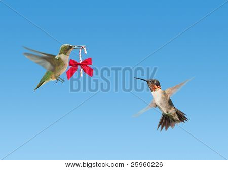 Tiny Hummingbird carrying a candy cane with a bow to another Hummingbird on blue background poster