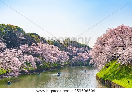 Cherry Blossoms Around Chidorigafuchi Park, Tokyo, Japan.  The Northernmost Part Of Edo Castle Is No