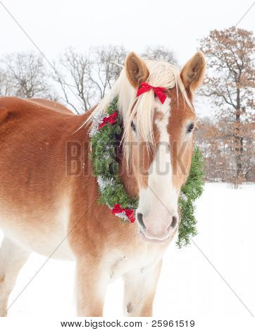 Handsome Belgian Draft horse wearing a Christmas wreath in light snowfall