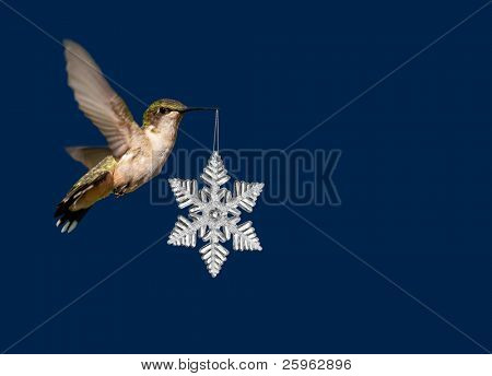 Hummingbird carrying a snowflake Christmas ornament on deep blue background poster