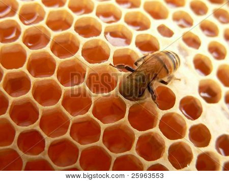 Macro of working bee on  honeycells