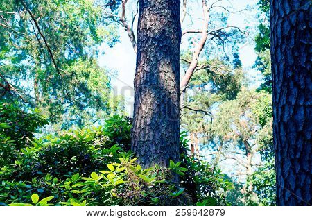 Trunk And Branch Of A Pine In Bright Colors