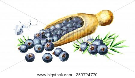 Juniper  Berries In The Wooden Spoon. Watercolor Hand Drawn Illustration  Isolated On White Backgrou