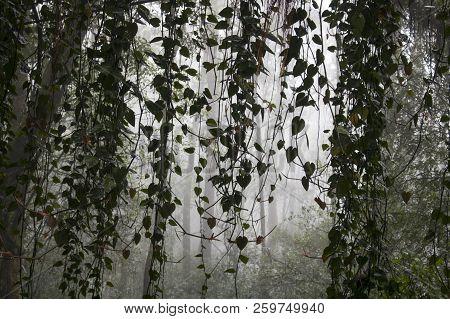 jungle vines leaves image photo free trial bigstock
