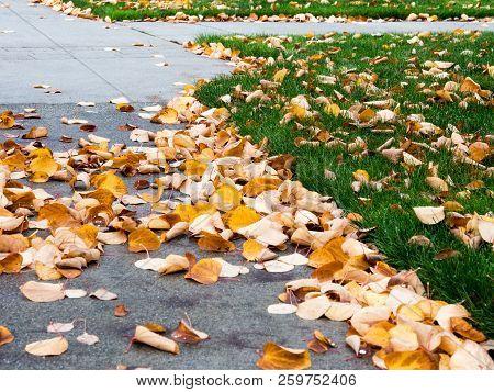 Yellow Autumn Leaves On Walkway And Yard