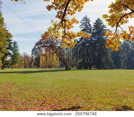 Large Glade In The Park, Covered Grass And Fallen Leaves Among Conifers And Deciduous Trees With Oak