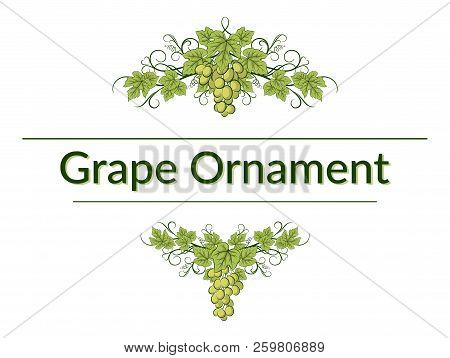 Green Grape Bunches, Berries And Leaves On White Background, Symmetrical Ornament. Vector