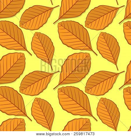 Seamless Pattern With Beech Autumn Leaves. Vector Illustration.