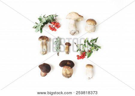 Autumn Styled Botanical Arrangement. Composition Of Porcino Mushrooms, Boletus Edulis, Rowan Berries