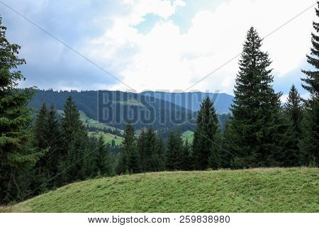 Picturesque Landscape With Conifer Forest On Mountain