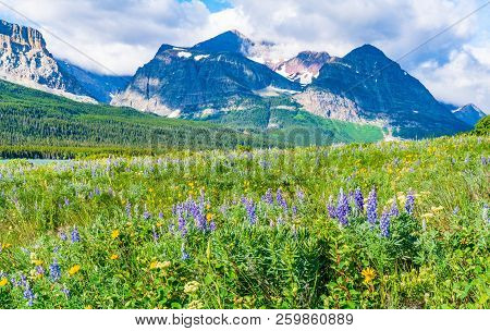 Wildflower Meadow Near Many Glacier In Glacier National Park, Montana