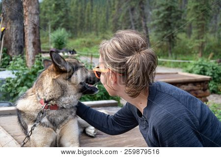 Adult female woman pets an Alaskan husky sled dog while the canine sits on his kennel in Denali National Park in Alaska poster