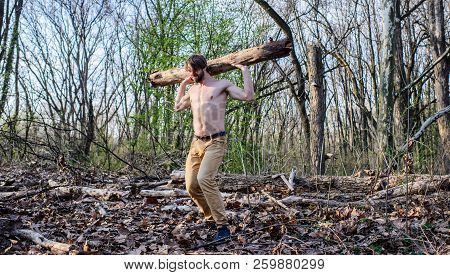 Man Brutal Strong Attractive Guy Collecting Wood In Forest. Man Beaded Brutal Sexy Lumberjack Carry