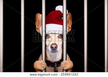 Mugshot Of A Christmas Santa Bad Dog Behind Bars In Jail Or Prison