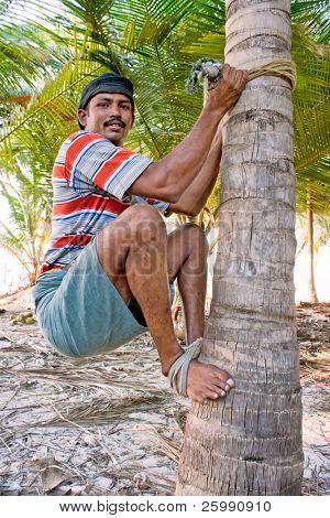 Hombre hábil fuerte están subiendo en cocotero, Kerala, India