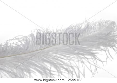 poster of Soft Feather Macro on white background studio shot