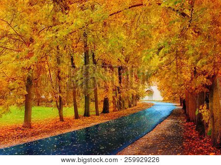 Fall landscape. Fall trees with yellow foliage and fall leaves on the wet footpath in fall park alley after rain. Colorful fall landscape scene