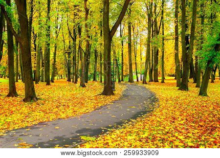 Autumn landscape with colorful autumn trees and yellow fallen autumn leaves. Autumn alley in the city park. Colorful autumn alley in cloudy autumn day