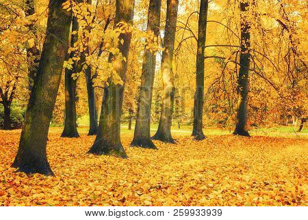 Autumn picturesque landscape. Autumn trees with yellowed foliage in October park. Colorful autumn landscape in bright tones. Autumn trees in the autumn city park