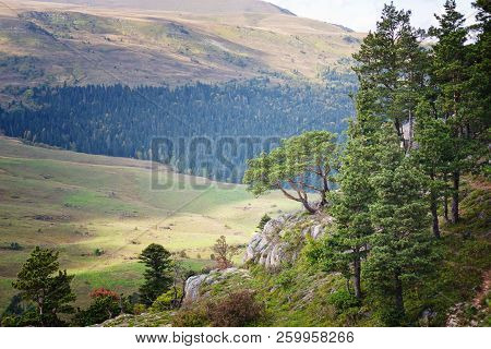 Image Of Fairy Mountain Landscape With Conifer Trees