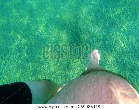 Swimming On The Clean Sea Water And Seagrasses. Cesme, Izmir, Turkey
