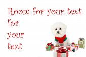 "a pure breed ""Bichon Frise"" with a red bow, with wrapped gifts ""isolated on white"" with ""room for your text"" poster"