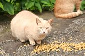 a Feral cat being fed on the island of Maui Hawaii poster