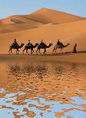 Camel caravan going along the lake the Sahara Desert, Morocco. poster