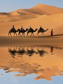 Camel caravan going through the sand dunes in the Sahara Desert, Morocco. poster