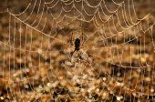 Brilliant display of early morning sunlight in water drops on a spider web after a heavy fog poster