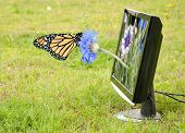 Cornflower growing out of a computer monitor, with a butterfly resting on it poster