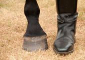 Closeup of a horse and a rider's feet next to each other poster