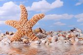 Dancing Starfish at the Beach with Reflection in the Water poster