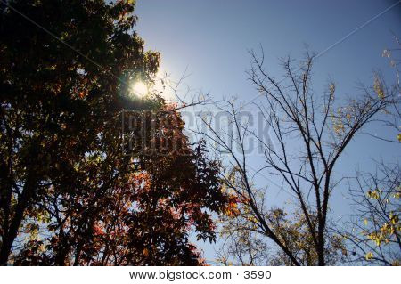 Sun Behind Fall Colors